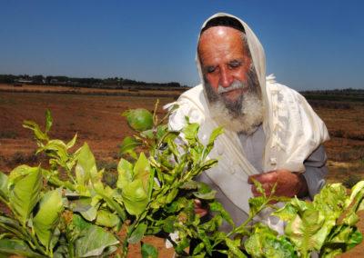 Shemitah — the Forgotten Sabbath